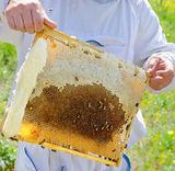 Beekeeper Starter Kits